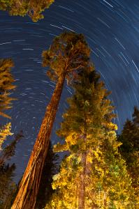Redwoods and star trails / Nikon D3, 24mm, f/6.3, ISO400, 30 minutes